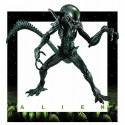 Figurine Alien SSS Premium Figure Alien Warrior Special Color Edition